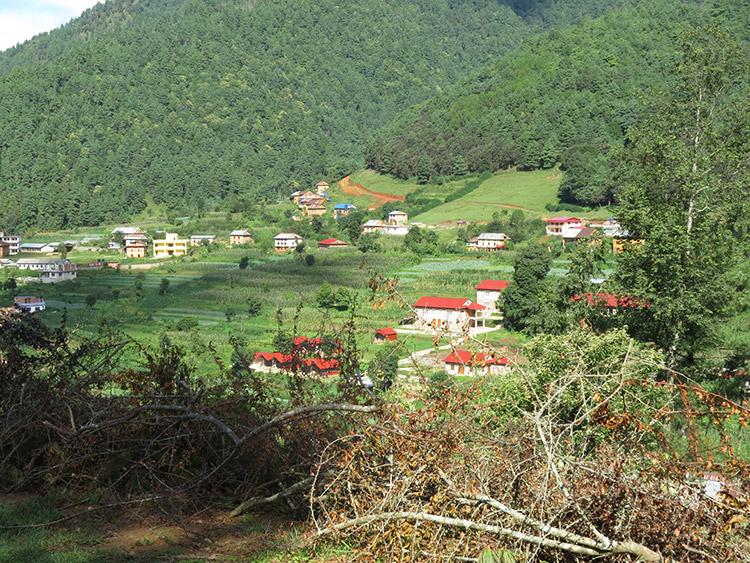 Morning walk in Chitlang village